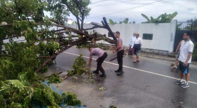 Aksi Cepat Tanggap Tim Pammat Polda Gorontalo Evakuasi Pohon Tumbang di Jalan Palma